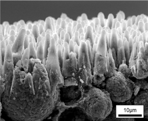 SEM image of laser-generated micro-cones in NMC (Lithium nickel manganese cobalt oxide) high power electrode surface